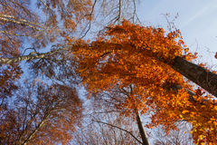 Forêt jaune Image stock