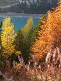 Forêt jaune Image libre de droits