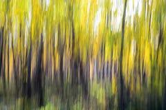 Forêt jaune (effet paning) Image libre de droits