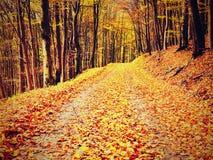 Forêt jaune-orange d'Autumn Forest Autumn avec la terre colorée Images libres de droits