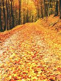 Forêt jaune-orange d'Autumn Forest Autumn avec la terre colorée Photos stock