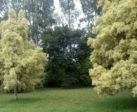 Forêt latine Images libres de droits