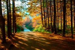 Forêt le matin Image libre de droits