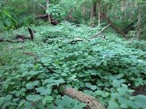 Forêt luxuriante à un parc local Image stock