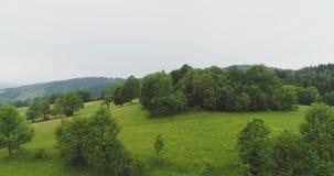 Forêt luxuriante contre le ciel clips vidéos
