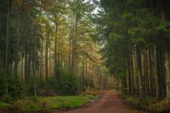 Forêt mélangée à plusiers étages en Europe centrale Image libre de droits