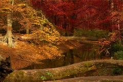 Forêt mélangée Photo libre de droits