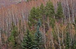 Forêt mélangée Photographie stock libre de droits