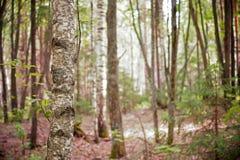 Forêt mélangée Image libre de droits