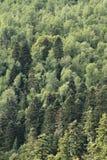 Forêt mélangée Photo stock