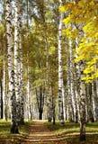 Forêt mélangée d'or d'automne par temps ensoleillé Photographie stock libre de droits