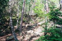 Forêt mélangée dans les montagnes carpathiennes photographie stock libre de droits