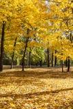 Forêt mélangée, feuillage d'automne photo libre de droits