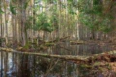 Forêt mélangée humide de printemps avec de l'eau debout image stock