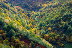 Forêt mélangée, regard automnal Images stock