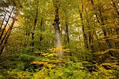 Forêt magique à l'arrière-plan d'automne Images stock
