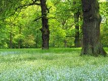 Forêt magique Images stock