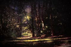 Forêt magique photos libres de droits