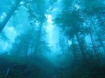 Forêt magique Image libre de droits