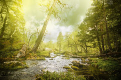 Forêt magique Photographie stock