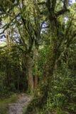 Forêt magique avec des arbres couverts de la mousse Photos libres de droits
