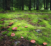 Forêt magique avec des champignons sur le premier plan Photographie stock libre de droits