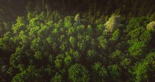 Forêt magique avec les arbres verts et blancs ci-dessus Nature de haute Fond aérien de pousse de bourdon photo stock