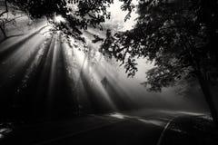 Forêt magique avec les rayons légers Photo stock