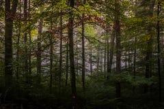 Forêt magique d'automne, paysage romantique, brumeux, brumeux images stock