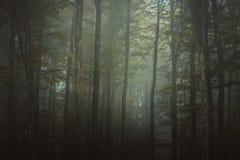 Forêt magique d'automne, paysage romantique, brumeux, brumeux image stock
