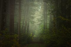 Forêt magique d'automne, paysage romantique, brumeux, brumeux photographie stock libre de droits
