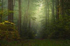 Forêt magique d'automne, paysage romantique, brumeux, brumeux photos stock
