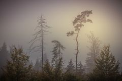 Forêt magique d'automne, paysage romantique, brumeux, brumeux photo libre de droits