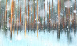Forêt magique d'hiver, un conte de fées, image libre de droits