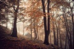 Forêt magique dans le brouillard Image stock