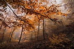 Forêt magique dans le brouillard Image libre de droits