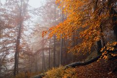 Forêt magique dans le brouillard Photographie stock libre de droits