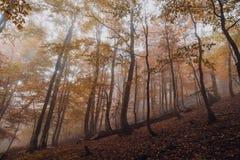 Forêt magique dans le brouillard Photos libres de droits