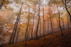 Forêt magique dans le brouillard Photos stock