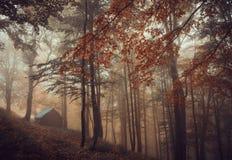 Forêt magique dans le brouillard Photo stock