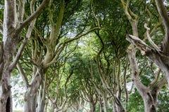 Forêt magique, Irlande du Nord Image libre de droits