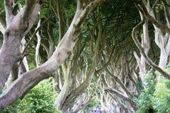 Forêt magique, Irlande du Nord Photos libres de droits