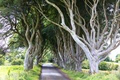 Forêt magique, Irlande du Nord Image stock