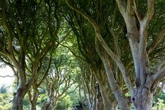 Forêt magique, Irlande du Nord Photos stock