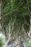 Forêt magique, Irlande du Nord Images libres de droits