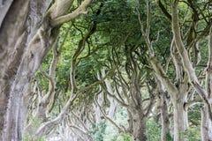 Forêt magique, Irlande du Nord Photographie stock libre de droits