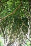 Forêt magique, Irlande du Nord Photo libre de droits