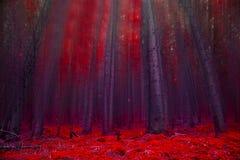 Forêt magique rouge avec des lumières Photos stock