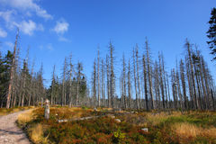 Forêt malade Images libres de droits