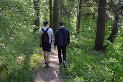 Forêt, marchant, nature, augmentant, promenade, arbre, femme, chemin, couple, les gens, hausse, bois, parc, dehors, arbres, famil image stock